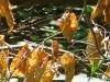 Waldlichter 03 - Laub