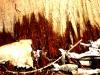 Waldlichter 04 - Laub Unterholz